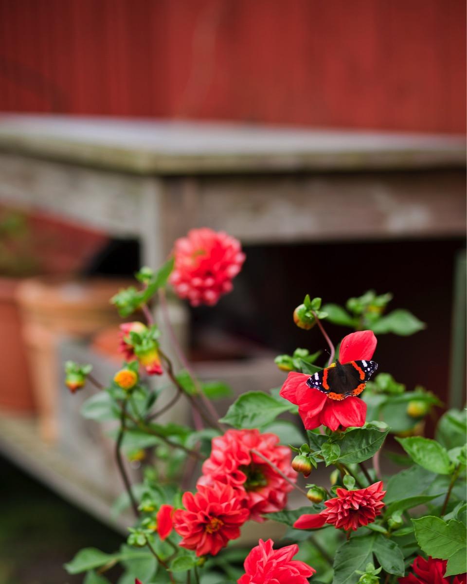 Våra trädgårdar   inspiranda
